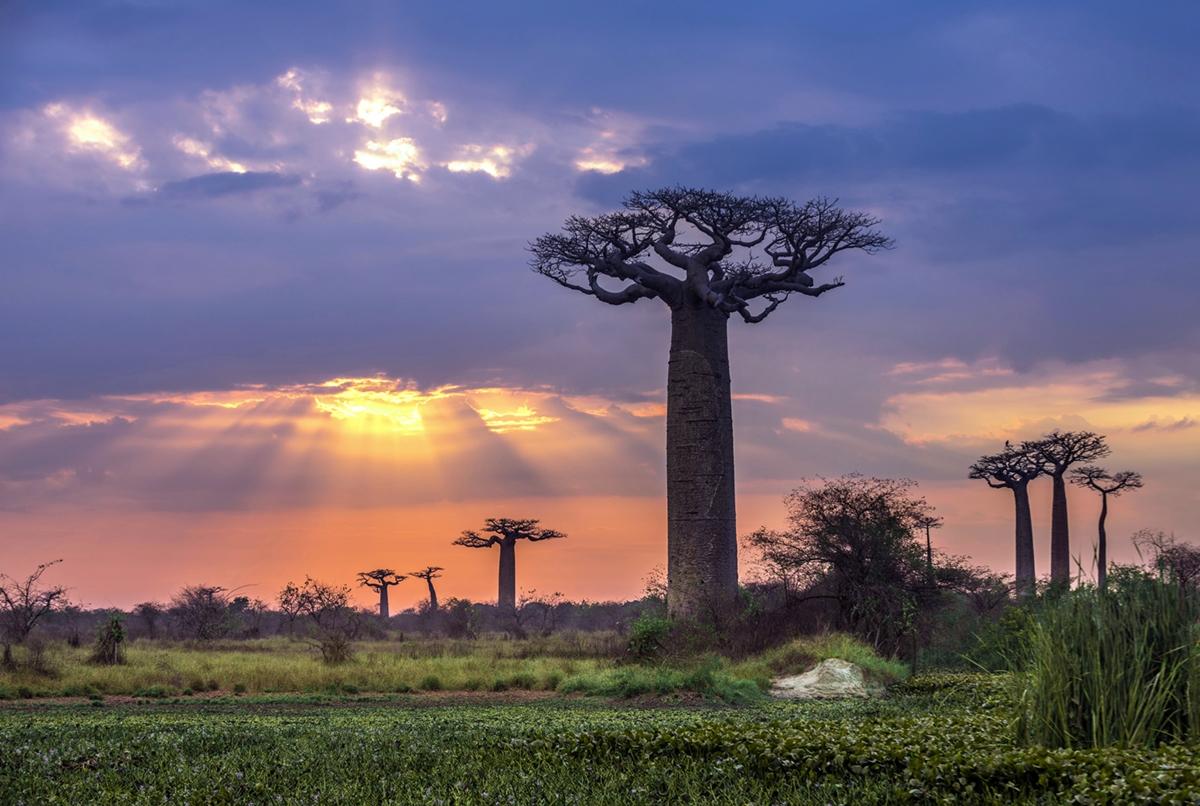 Zboara catre Madagascar din Bucuresti cu numai 2245 RON (497 EUR)